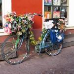 am_bike1