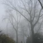 den_bosch_fog1
