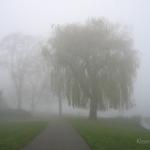 den_bosch_fog3