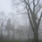 den_bosch_fog5