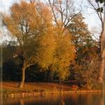 hertogenbosch14
